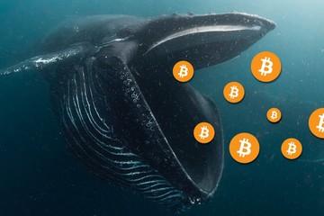 Cá voi Bitcoin đang dần 'tuyệt chủng'?