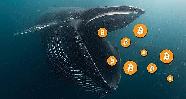 """""""Cá voi"""" được coi là thành phần có ảnh hưởng lớn nhất trong thị trường Bitcoin."""