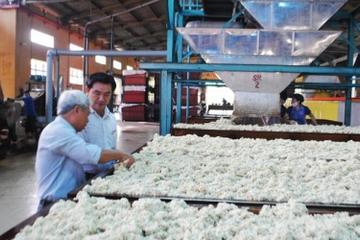 Cổ phiếu ở vùng đỉnh, Cao su Đồng Phú muốn bán hết cổ phiếu quỹ