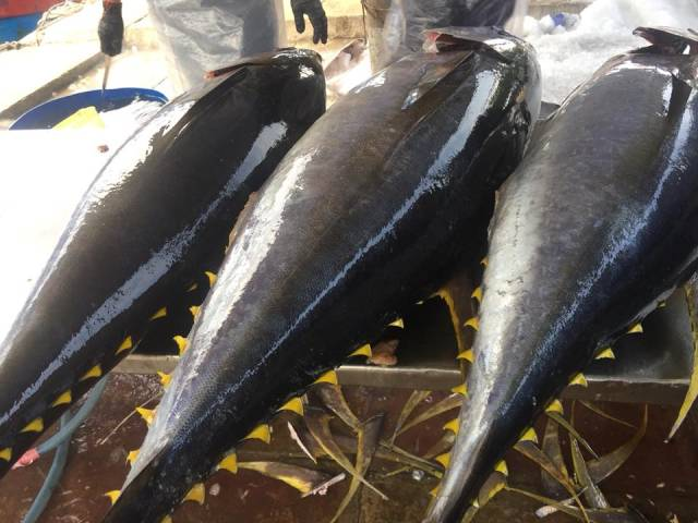 Xuất khẩu cá ngừ tăng đột biến