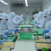 VASEP kiến nghị không đưa sản phẩm thủy sản vào danh mục kiểm dịch thú y