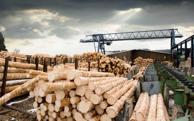 'Cơn điên' của giá gỗ cuối cùng đã hạ nhiệt