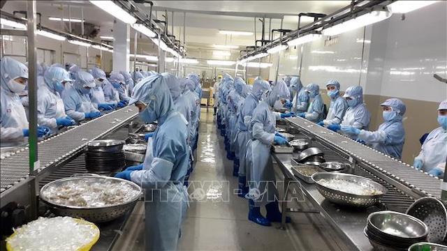 Chế biến tôm đông lạnh xuất khẩu tại Công ty cổ phần Thủy sản Thông Thuận Cam Ranh, tỉnh Khánh Hòa.