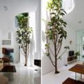 <p> Dự án được thiết kế bởi công ty Kiến trúc O với mong muốn khơi gợi trải nghiệm sống chân thực cho một gia đình trẻ sống trong một ngôi nhà phố đô thị điển hình của Việt Nam.</p>