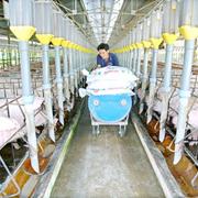 Chăn nuôi Phú Sơn muốn chia cổ tức tiền mặt 38%