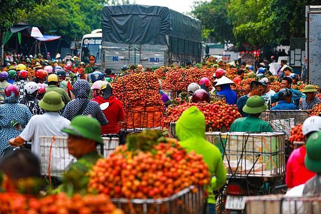 Bộ NN&PTNT đề nghị các địa phương cho phép lưu thông nông sản đối với hàng hóa, lái xe, và phương tiện vận tải giữa các vùng có dịch và vùng có nguy cơ cao.