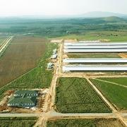 Tổ hợp trang trại bò sữa của Vinamilk tại Lào sẽ đi vào hoạt động từ quý I/2022