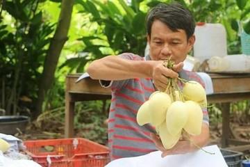 Trái cây Việt nguy cơ 'lép vế' khi sang Trung Quốc
