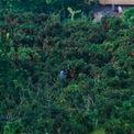 <p> Riêng huyện Lục Ngạn, tổng diện tích trồng vải năm nay là 15.450 ha, ước tính sản lượng đạt khoảng 120.000 tấn. Những ngày này đang là cuối vụ vải Thanh Hà và chuẩn bị bước vào thời điểm thu hoạch vải thiều.</p>