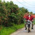 <p> Đến nay, huyện đã tiêu thụ được hơn 5.800 tấn, chủ yếu đi thị trường phía Nam, một số khác được chuyển đến các siêu thị, cửa hàng bán lẻ tại Hà Nội, một số tỉnh phía Bắc và xuất khẩu sang Trung Quốc qua cửa khẩu Lào Cai, Lạng Sơn.</p>