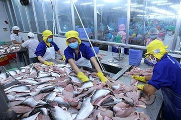 Doanh số xuất khẩu tháng 5 của Vĩnh Hoàn giảm, thị trường Mỹ hồi phục mạnh
