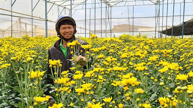 Đà Lạt: Giá hoa cúc tăng vọt sau khi chợ hoa Đầm Sen mở cửa trở lại