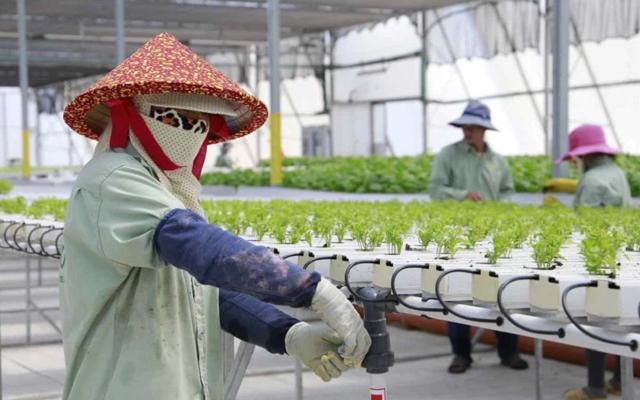 Doanh nghiệp nông nghiệp công nghệ cao Israel đẩy mạnh việc mở rộng đầu tư tại Việt Nam.