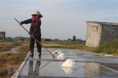 Bình Định: Diêm dân gặp khó khăn khi giá muối xuống quá thấp
