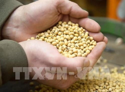 FAO lo ngại nguy cơ bất ổn xã hội do giá lương thực tăng cao