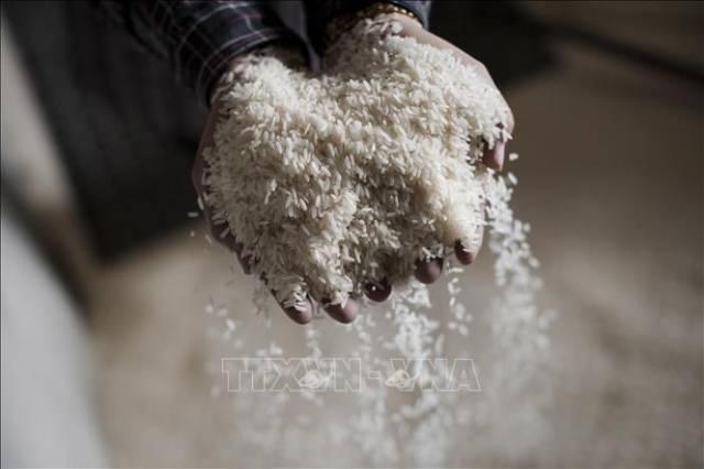 Giá gạo thế giới giảm xuống mức thấp nhất 15 tháng
