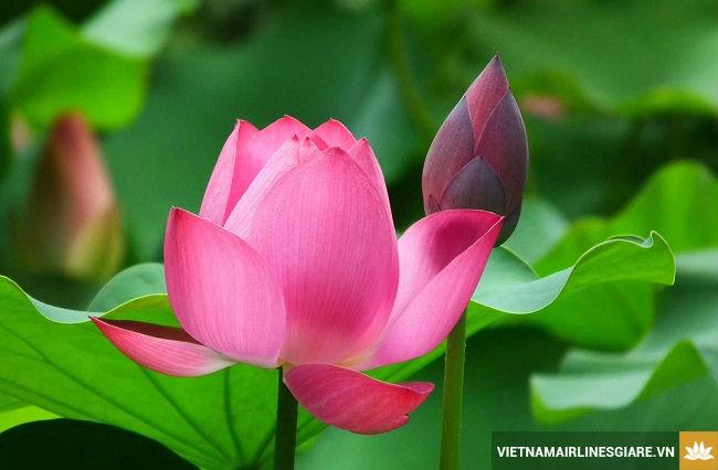 Vietnam Airlines: Hoa sen có nở trở lại?