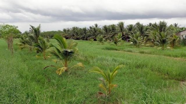 Hậu Giang, Tiền Giang chuyển mục đích sử dụng 86 ha đất lúa sang đất phi nông nghiệp