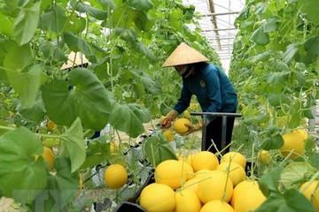 Doanh nghiệp có thể được ưu đãi 9 năm lãi vay và hỗ trợ 10 tỷ đồng khi đầu tư vào nông nghiệp