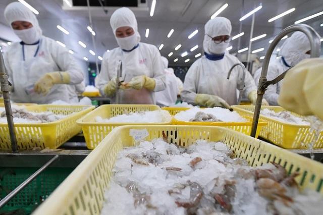 Nhiều công ty xuất khẩu tôm tăng trưởng mạnh từ đầu năm. Ảnh: Hoàng Hà.