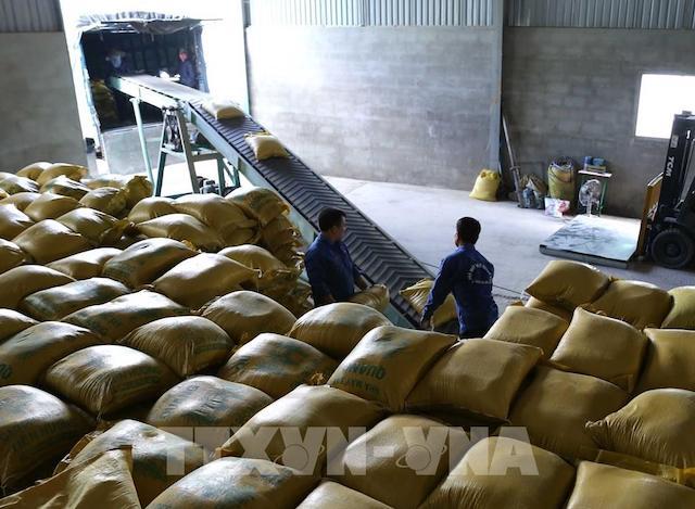 Giá gạo xuất khẩu của Thái Lan, Việt Nam đều giảm