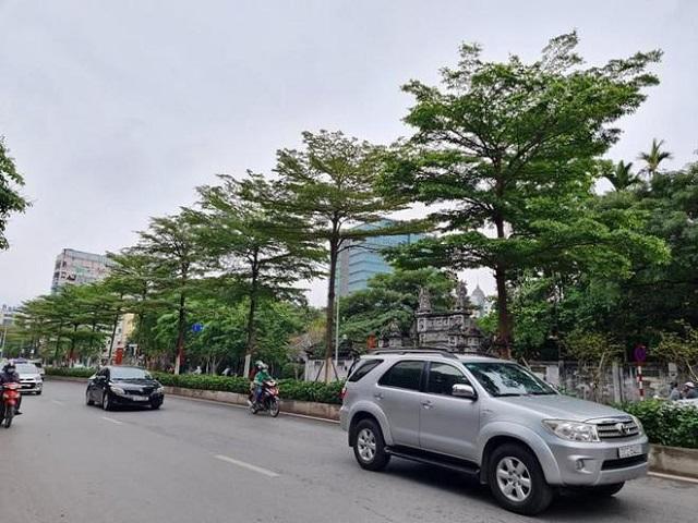 Công ty Công viên Cây xanh Hà Nội vừa thay thế hàng phong lá đỏ bằng bàng lá nhỏ trên phố Nguyễn Chí Thanh vào tháng 4/2021