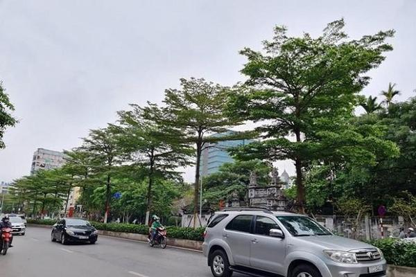 Bắt Tổng Giám đốc Công ty Cây xanh Hà Nội vì 'thổi giá' cây, gây thiệt hại 30 tỷ đồng