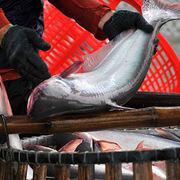 Ngành thủy sản kiến nghị được ưu tiên tiêm vaccine để phục hồi sản xuất, xuất khẩu