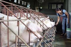 Giá thức ăn chăn nuôi tiếp tục tăng lần thứ 8, có doanh nghiệp tăng tới 9 lần