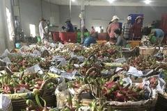 Bộ Nông nghiệp tháo gỡ khó khăn cho doanh nghiệp xuất khẩu sang Trung Quốc