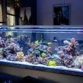 <p> Bể cá cũng là một trong những nguyên nhân gây nhiễu tín hiệu Wi-Fi. Vì nước là chất hấp thụ tín hiệu bức xạ rất tốt. Do vậy, sẽ có một vùng sóng Wi-Fi bị yếu xung quanh bể cá trong căn nhà. Ảnh: <em>Getty.</em></p>