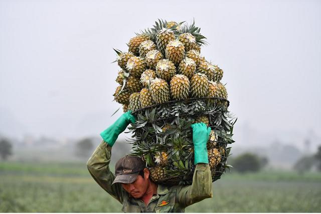 Hàng triệu tấn nông sản các tỉnh Nam Bộ, Tây Nguyên cần được tiêu thụ
