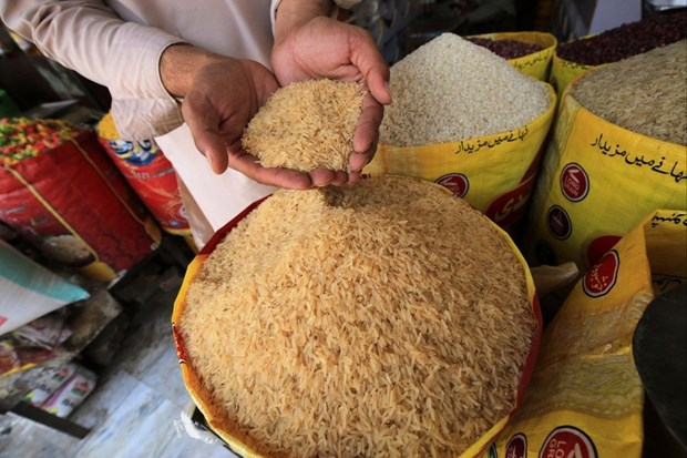 Giá gạo của Ấn Độ giảm xuống mức thấp trong nhiều năm