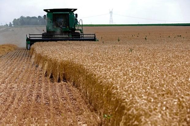 Thu hoạch lúa mỳ tại một trang trại ở Dixon, Illinois (Mỹ). (Nguồn: wsj.com)