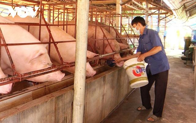 Giá lợn xuống thấp khiến người chăn nuôi gặp khó. Ảnh: VOV