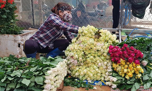 Hơn 100 triệu cành hoa ở Lâm Đồng cần được hỗ trợ tiêu thụ