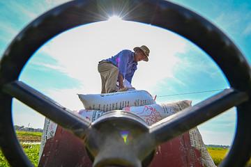 Giá tăng đến 72%, Bộ Nông nghiệp đề nghị kiểm tra mặt hàng phân bón