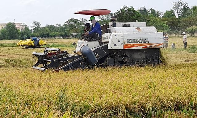 Bộ Công Thương kiến nghị Chính phủ tạo thuận lợi tiếp cận nguồn vốn thu mua thóc, gạo