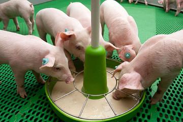 Việt Nam chi gần 3 tỷ USD nhập thức ăn chăn nuôi