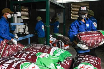 Việt Nam chi hơn 800 triệu USD nhập khẩu phân bón trong 7 tháng đầu năm