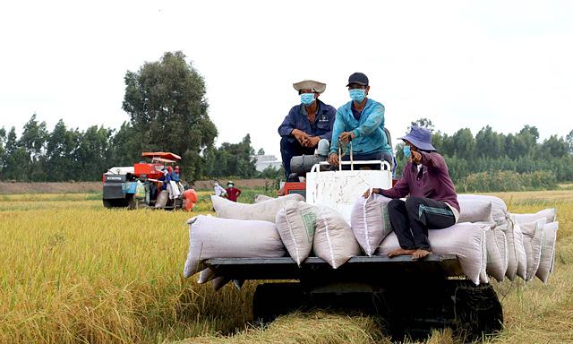 Kiến nghị mở 'luồng xanh' cho vận tải đường thủy để gỡ khó cho sản xuất, tiêu thụ gạo