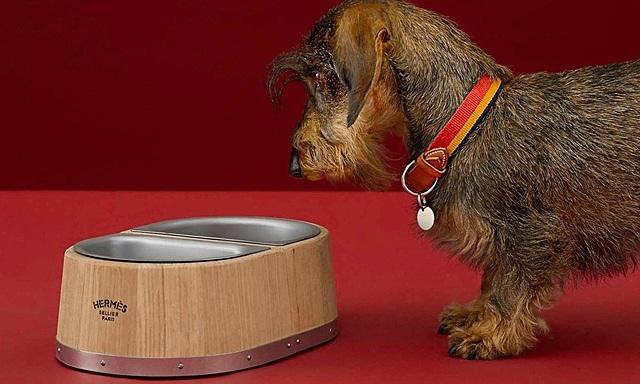 Hermes bán bát ăn của chó giá 1.140 USD