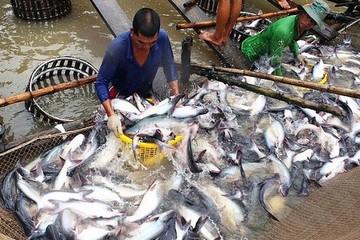 Lo ngại nguy cơ thiếu nguyên liệu thủy sản cuối năm