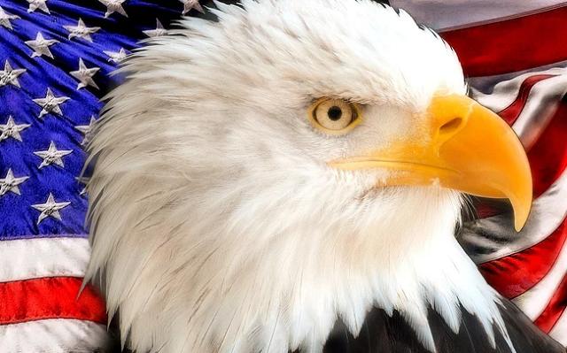 Những 'cánh đại bàng' Mỹ tại Việt Nam: Nhiều đại gia góp mặt nhưng mới 2 cái tên có doanh thu tỷ đô