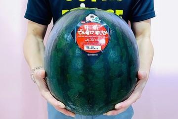 Không đi du lịch, dân Singapore đổ tiền mua hoa quả Nhật siêu sang thỏa mãn khẩu vị mùa dịch