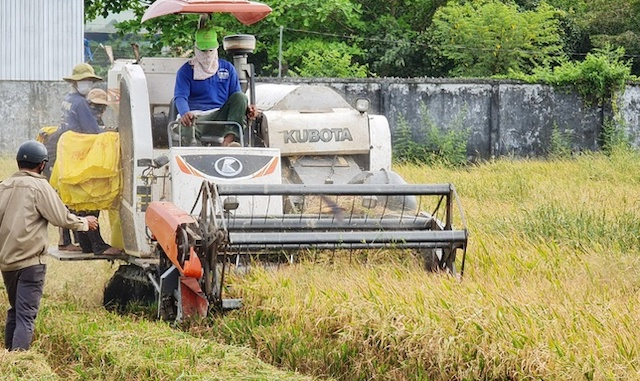 UBND tỉnh Bạc Liều vừa có công văn gửi Sóc Trăng và Hậu Giang đề nghị hỗ trợ, tạo điều kiện cho người và phương tiện thu hoạch lúa tại địa phương.