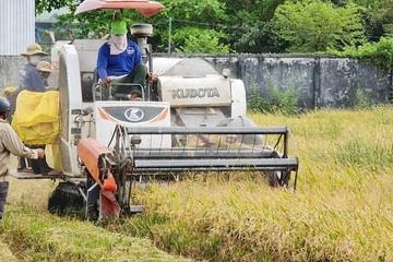 Bạc Liêu 'cầu cứu' các tỉnh giúp thu hoạch lúa