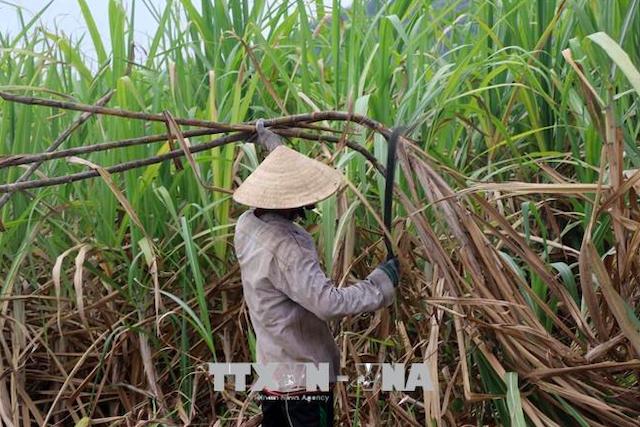 Tiếp nhận hồ sơ yêu cầu điều tra chống lẩn tránh phòng vệ thương mại với đường Thái Lan.