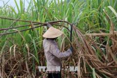 Tiếp nhận hồ sơ yêu cầu điều tra chống lẩn tránh phòng vệ thương mại với đường Thái Lan