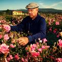 """<p class=""""Normal""""> Nói không quá thì Joseph Mul chính là người nắm giữ tài sản quan trọng nhất của Chanel. Ông luôn đội môt chiếc mũ nồi và lúc nào cũng có mặt ở cánh đồng hoa đã trải qua 5 thế hệ của gia đình bất kể thời tiết như thế nào. Ảnh: <em>The New Yorker</em></p>"""